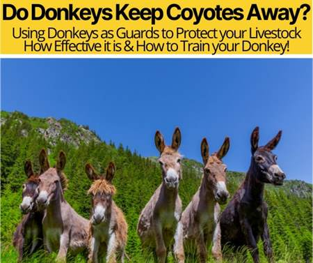 Do Donkeys Keep Coyotes Away