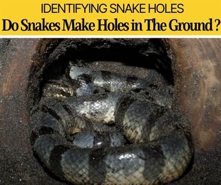 Do snakes make holes in the ground
