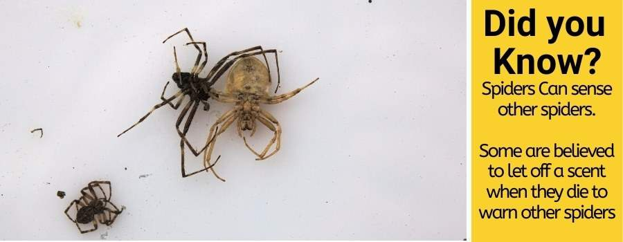 Do spiders Revenge & will it give you bad luck karma