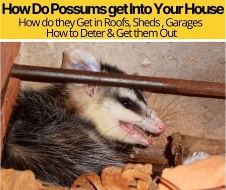 How Do Possums get Into Your House