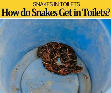 How Do Snakes Get In Toilets