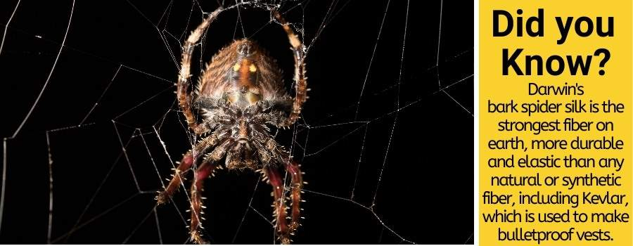 How strong are spiders