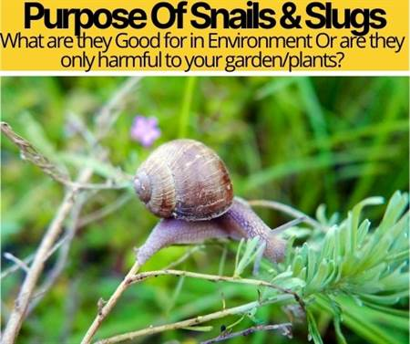 What Is The Purpose of Snails & Slugs