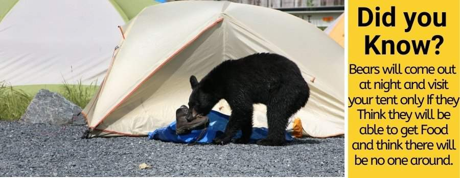 When are bears most active