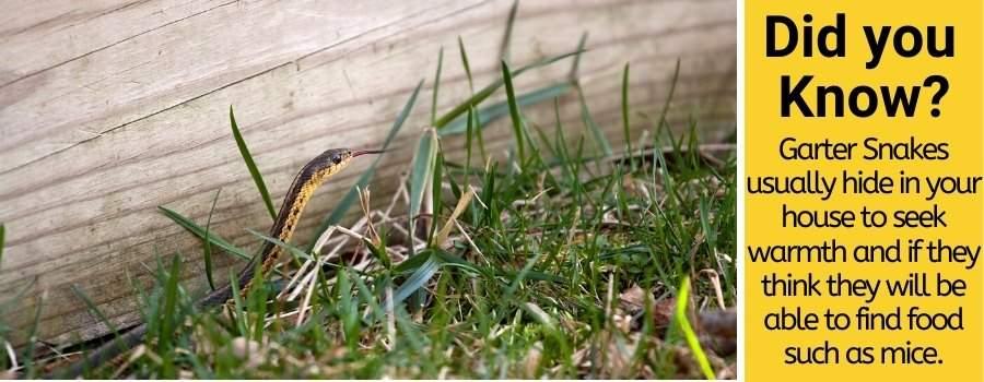 Where do Garter Snakes Hide in a House