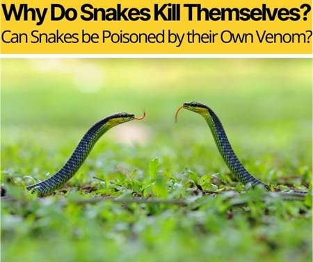 Why Do Snakes Kill Themselves