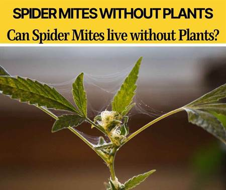 Can Spider Mites Live without Plants