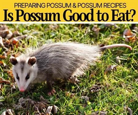 is possum good to eat