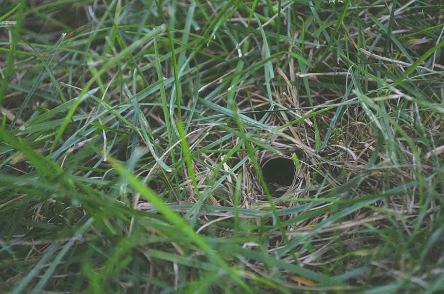 Stealthy Snake Hole in Ground done by Garter snake.